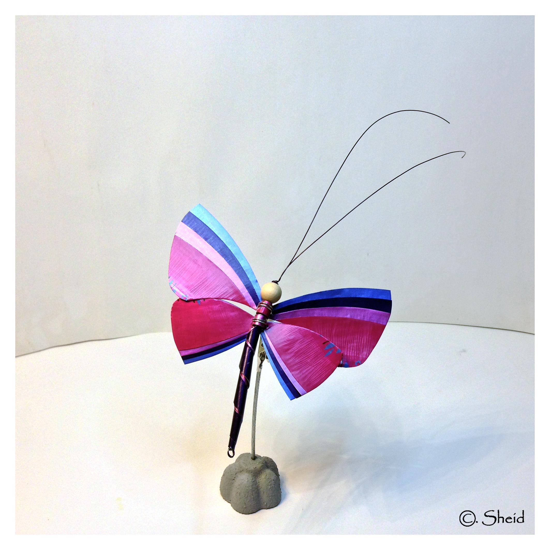 Papillon fushia