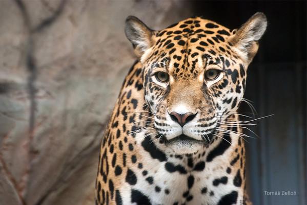 Leopardí pohled