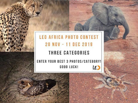 LEO Africa Calendar 2020 Photo Competition!