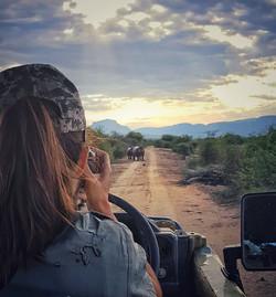 Wildlife photography moments