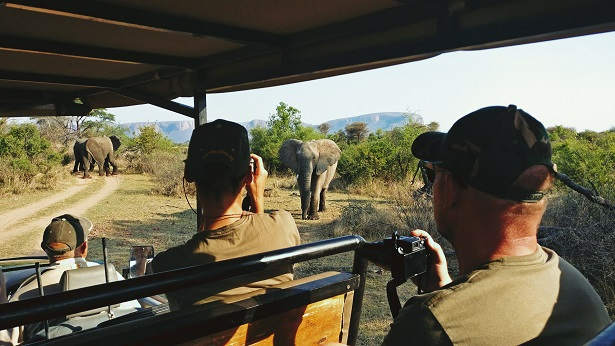 Viewing Elephants on drive