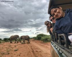 Volunteers and elephant