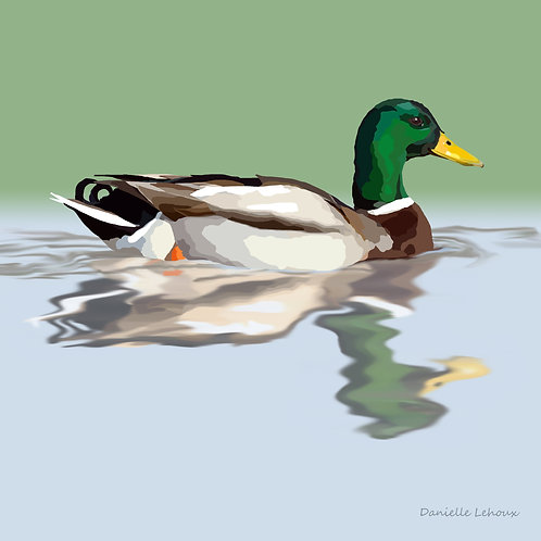 Mallard - Bird Art - Graphic Art Print