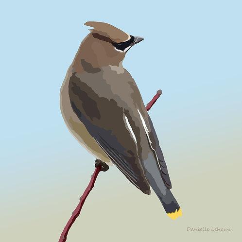 Cedar Waxwing - Bird Art - Graphic Art Print