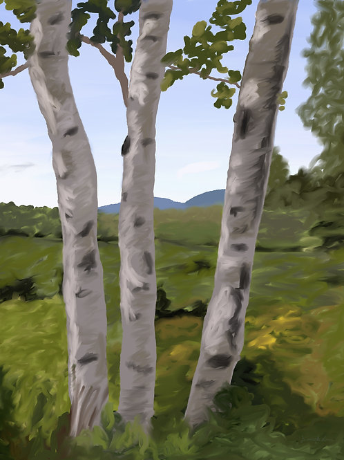 Birch Trees (Day 2)