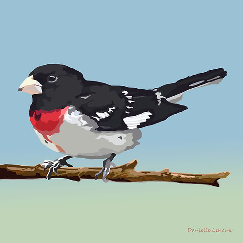 Rose-breasted Grosbeak - Bird Art - Graphic Art Print