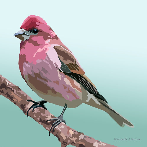 Purple Finch - Bird Art - Graphic Art Print
