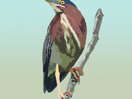 The Solitary Green Heron
