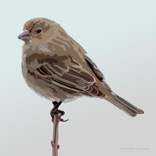 House Finch - Bird Art - Graphic Art Print