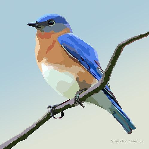 Eastern Bluebird - Bird Art - Graphic Art Print