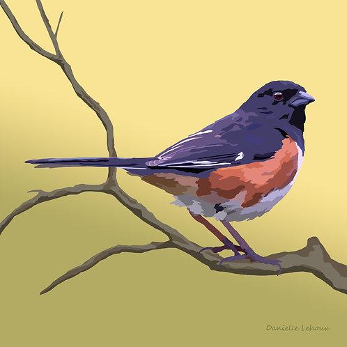Eastern Towhee - Bird Art - Graphic Art Print