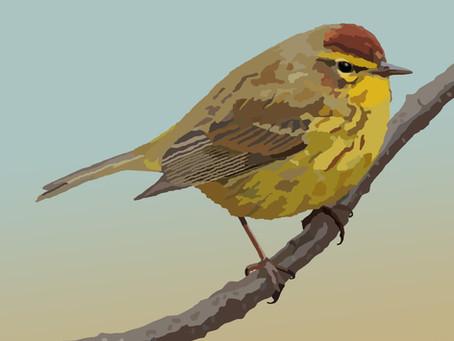 New Artwork - Palm Warbler