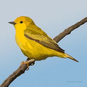 New Artwork - Yellow Warbler