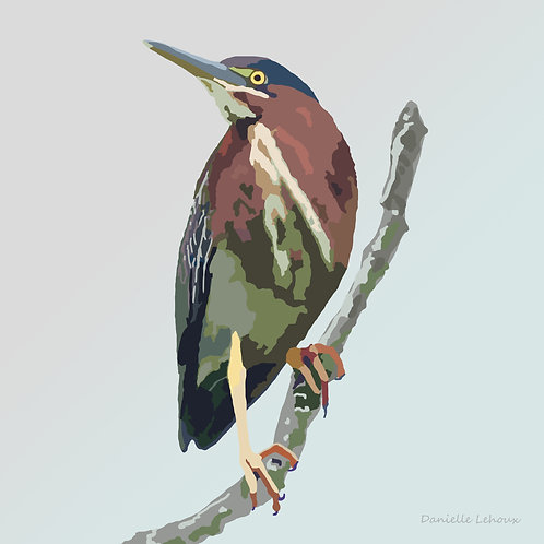Green Heron - Bird Art - Graphic Art Print