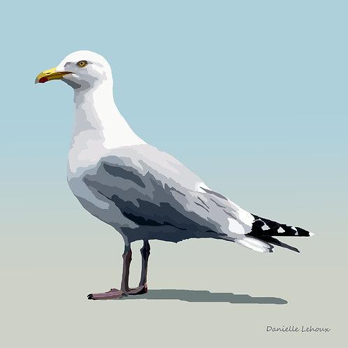 Herring Gull - Bird Art - Graphic Art Print