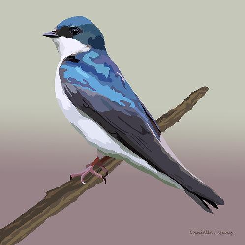 Tree Swallow - Bird Art - Graphic Art Print