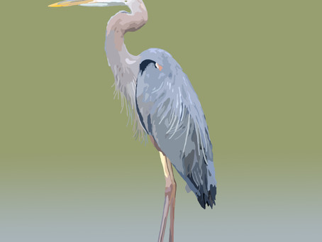 The Majestic Great Blue Heron