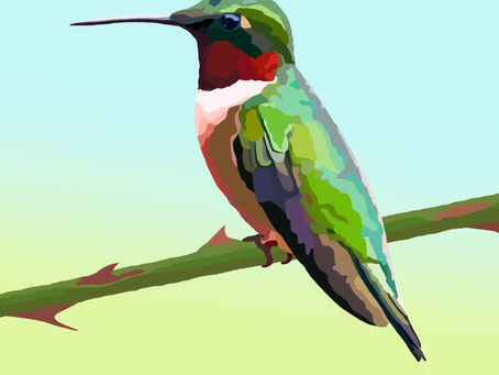 The Small (but mighty) Ruby-throated Hummingbird