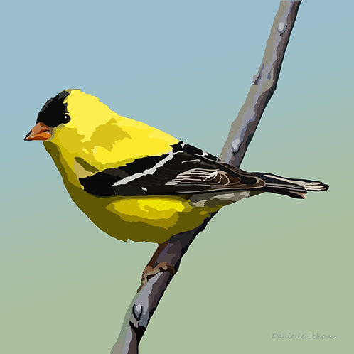 American Goldfinch - Bird Art - Graphic Art Print