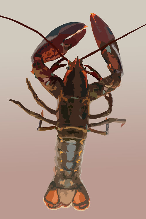 Maine Lobster #2 - Graphic Art Print