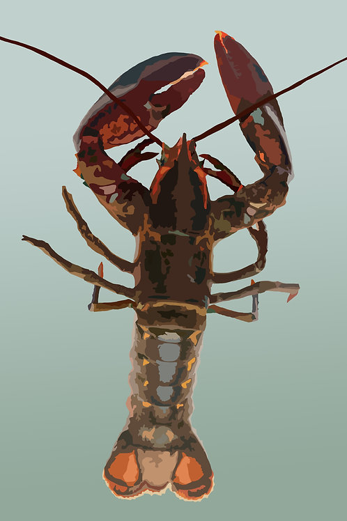 Maine Lobster #1 - Graphic Art Print