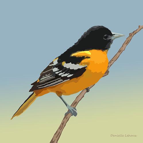Baltimore Oriole - - Bird Art - Graphic Art Print