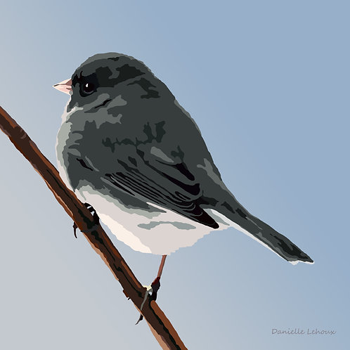 Dark-eyed Junco - Bird Art - Graphic Art Print