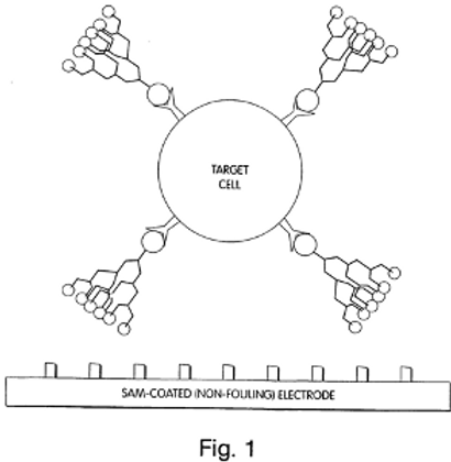ASSAYS INVOLVING COLLOIDS AND NON-COLLOIDAL STRUCTURES