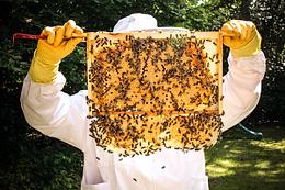 Brian bees honeycomb