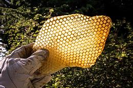 Comb beehive