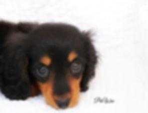 PeeWee 9 weeks old 043.JPG