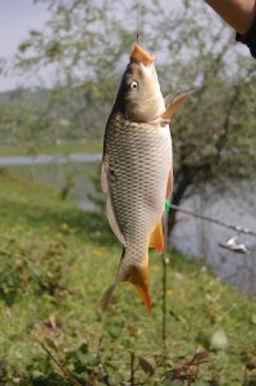 Рыбалка Краснодарский Край