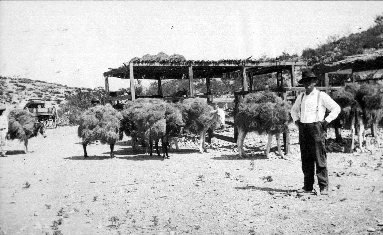 villa1917waldronbeforevilla