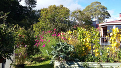 Karunamitras veggie garden.jpg