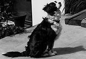 chien du bb-moensberg