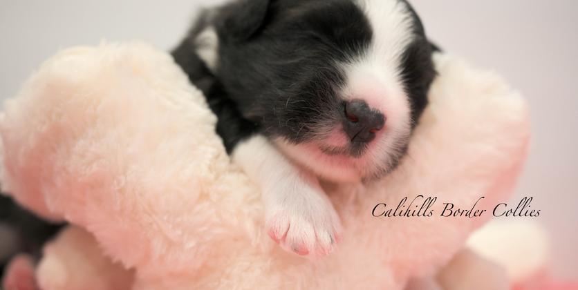 edit calihills litter -3141.png