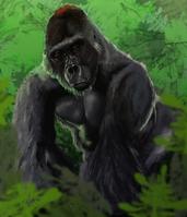Gorillia