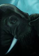 Peek-a-boo Walrus