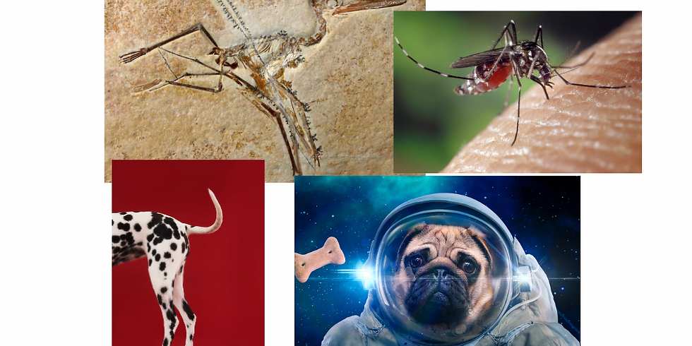 Animals Through Time Part 2