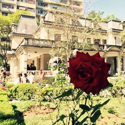 Lenise Costa _Costa_Lenise (Casa das Rosas)