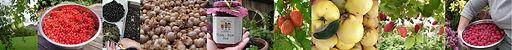 Three Fruity Ladies homegrown herefordshre preserves