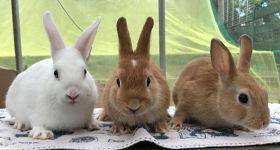 ウサギ写真.jpg