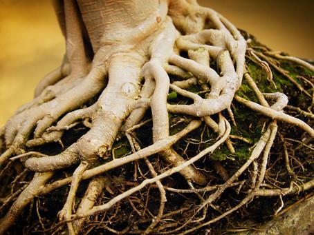 Root-जड़