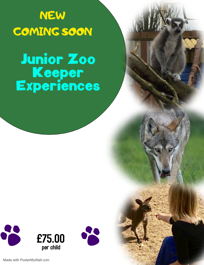 Copy of Dog Walkers Flyer - Made with PosterMyWall-2.png