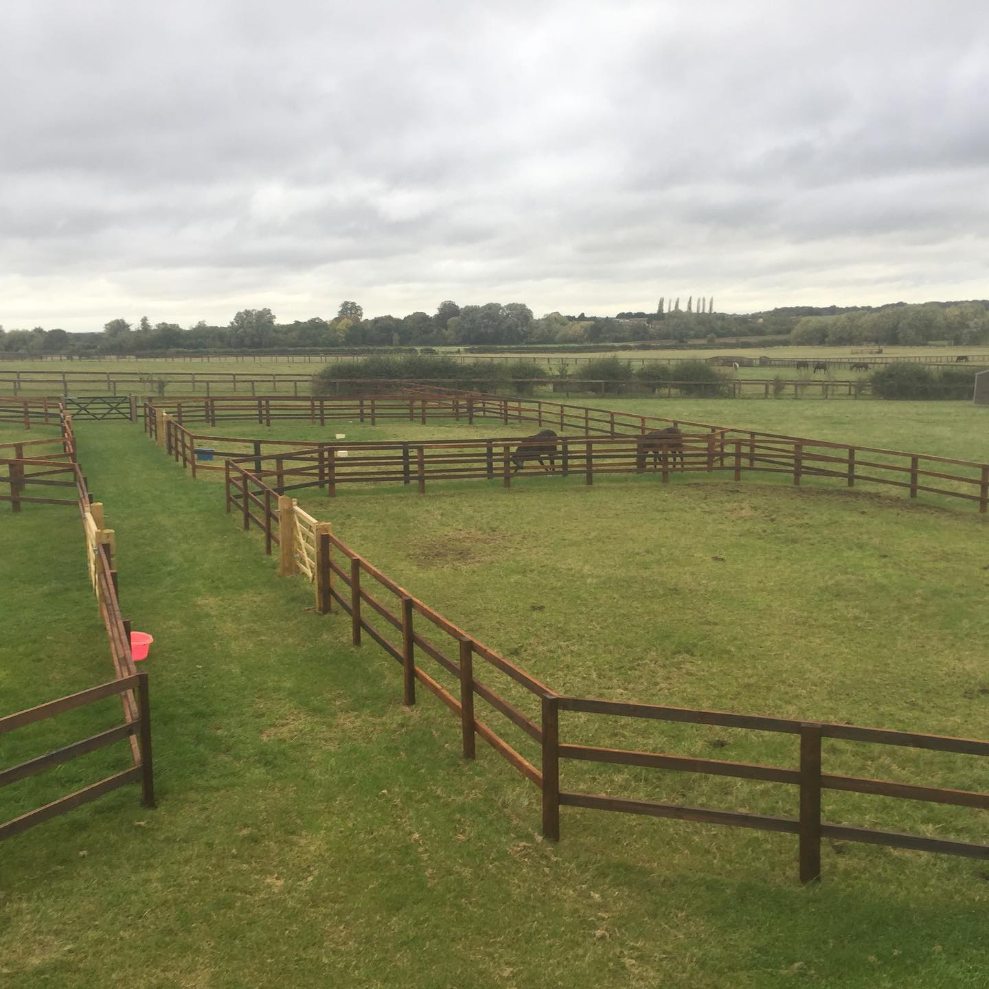 Post and rail holding paddocks