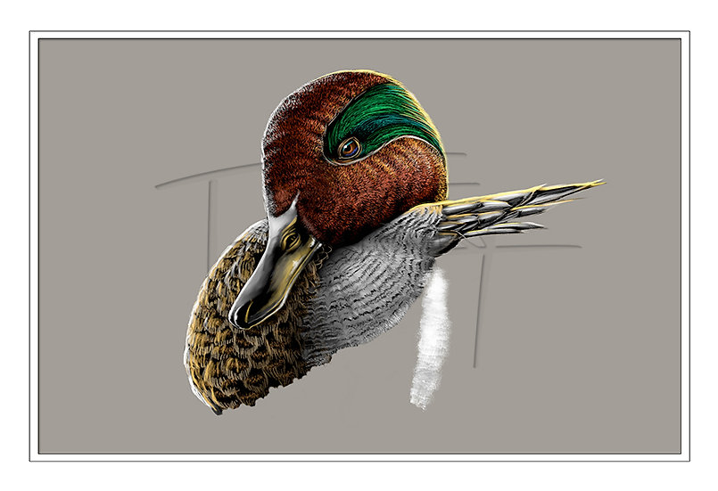 Portrait of a Green Wing