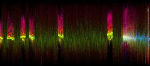 Elephant Sounds (x209.75), Katie Blake