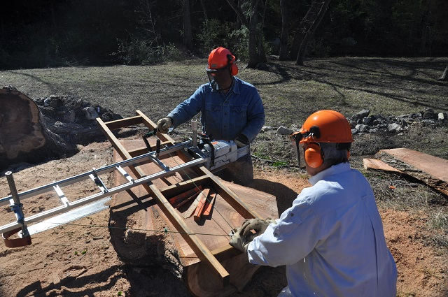 Elm, Chainsawmilling 9