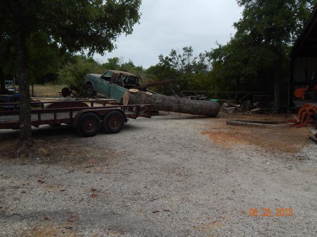 post oak log 0781.jpg