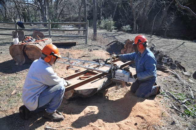 Elm, Chainsawmilling 10